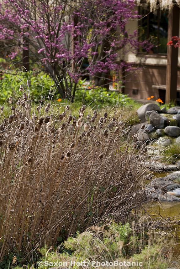 teasels by pond in backyard bird habitat garden