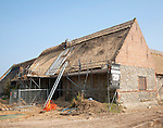 Thatcher working on new thatch barn roof at Windspurs farm, Roughton, Norfolk, England