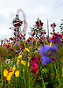 Colourful flowers in the Olympic Park, with the Orbit Tower sculpture.