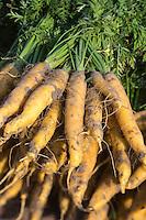 France, Nord (59), Bergues: Jour de marché, carottes  //  France, Nord, Bergues:  Market Day, carrots