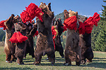 Romania , bear dancers