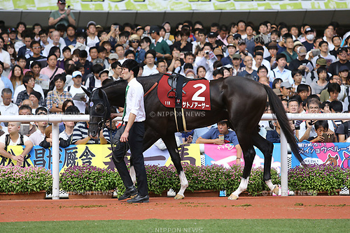 Satono Arthur,<br /> SEPTEMBER 24, 2017 - Horse Racing :<br /> Satono Arthur is led through the paddock before the Kobe Shinbun Hai at Hanshin Racecourse in Hyogo, Japan. (Photo by Eiichi Yamane/AFLO)
