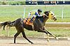 Saint Abe at Delaware Park on 8/1/11.