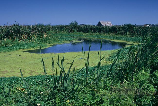 Arcata Marsh, Arcata, Humboldt County, CALIFORNIA