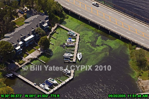 St. Johns River - Algae - Foam