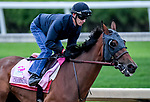 LOUISVILLE, KENTUCKY - APRIL 28: Champagne Anyone, trained by Ian Wilkes, exercises in preparation for the Kentucky Oaks at Churchill Downs in Louisville, Kentucky on April 28, 2019. John Voorhees/Eclipse Sportswire/CSM