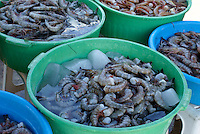 Buckets of freshly caught shrimp for sale at the fisherman's market in Mazatlan, Sinaloa, Mexico