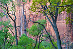 Waterfall and Fremont cottonwood trees, Temple of Sinawava, Zion National Park, Utah, USA