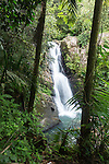 Nature & El Yunque National Forest