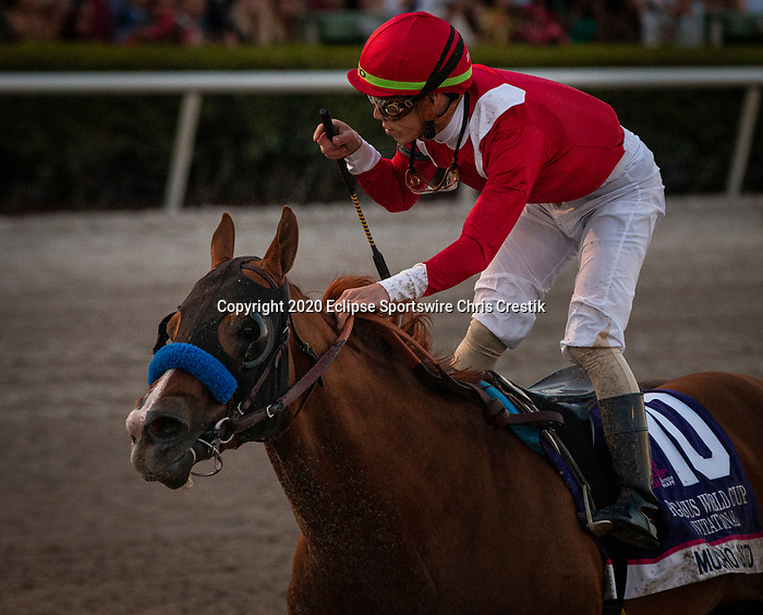 HALLANDALE BEACH, FL: #10 Mucho Gusto all class in the Grade I Pegasus World Cup at Gulfstream Park in Hallandale Beach, Florida on January 25