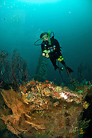 Diver on The Wreck Bianca C<br />