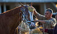 LOUISVILLE, KY - MAY 01: Justify, trained by Bob Baffert, gets a bath after exercising in preparation for the Kentucky Derby at Churchill Downs on May 1, 2018 in Louisville, Kentucky. (Photo by Scott Serio/Eclipse Sportswire/Getty Images)