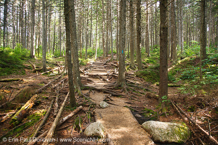 Zealand Trail during the summer months in the White Mountains, New Hampshire USA