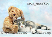 Xavier, ANIMALS, cats, photos, SPCHCATS714,#A# Katzen, gatos