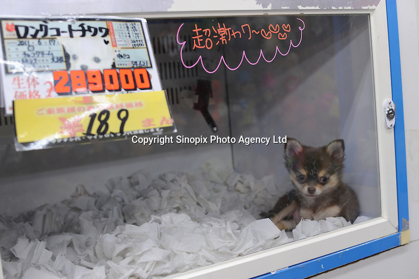 Tiny pets are sold in pet shops in Tokyo, Japan. Japan has 23 cats and dogs as pets and is overpoulated. The pets come from unregulated breeders and often end up getting dumped and gassed...photo by  / Sinopix