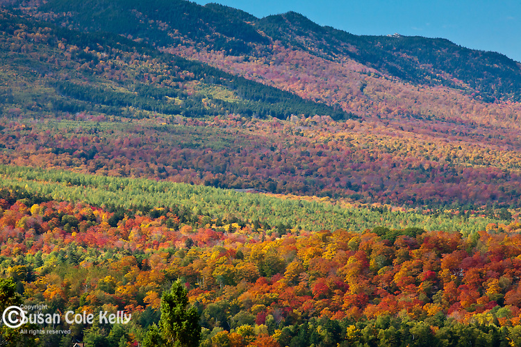Foliage on Moose Mountain in Piscataquis County, ME, USA