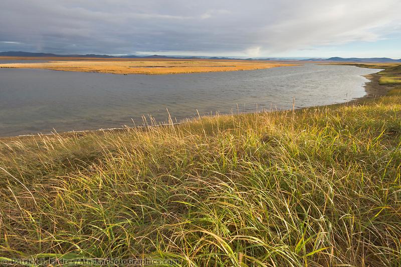 Safety sound and wetland grasses, Seward Peninsula, Alaska.
