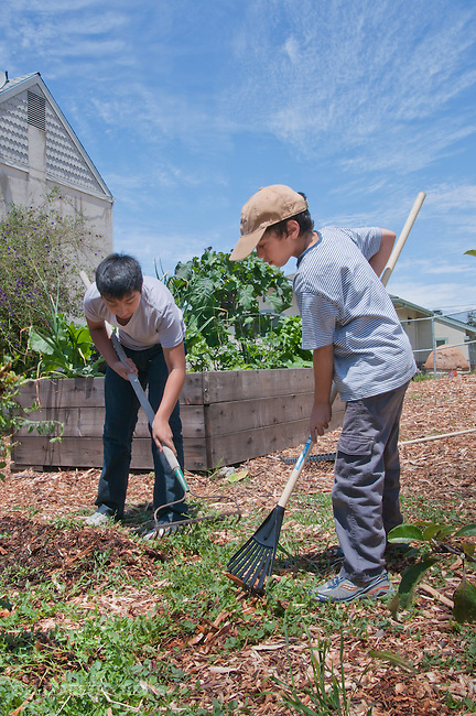 Berkeley CA Students, 10-12, working on gardening at school's edible school yard