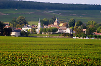 vineyard the village aloxe-corton cote de beaune burgundy france