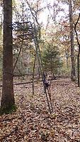 NWA Democrat-Gazette/FLIP PUTTHOFF <br />The colorful woods at Camp See No Deer, seen on Nov. 5, offer quiet tree stand meditation.