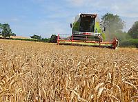 Combining Einstein winter wheat, Pattingham, near  Wolverhampton.