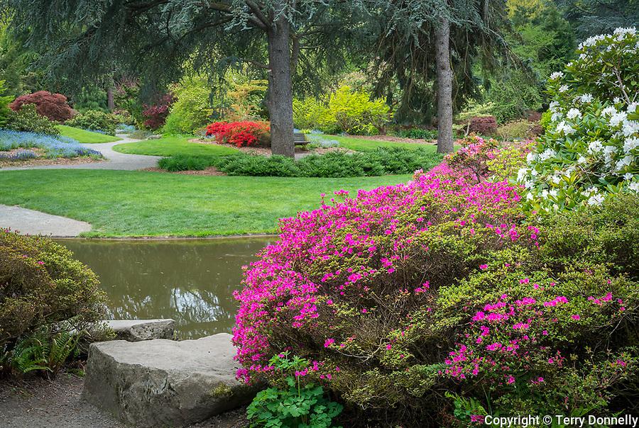 Seattle Washington:<br /> Kubota Garden, spring in the Tom Kubota stroll garden