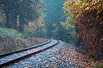Oregon, West Central, Wren. Tracks through fog and autumn color.