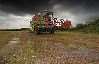 Combine harvester and stormy skies, County Durham.