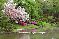65021-03609 Azaleas and flowering trees in Japanese Garden in spring, MO Botanical Gardens, St Louis, MO