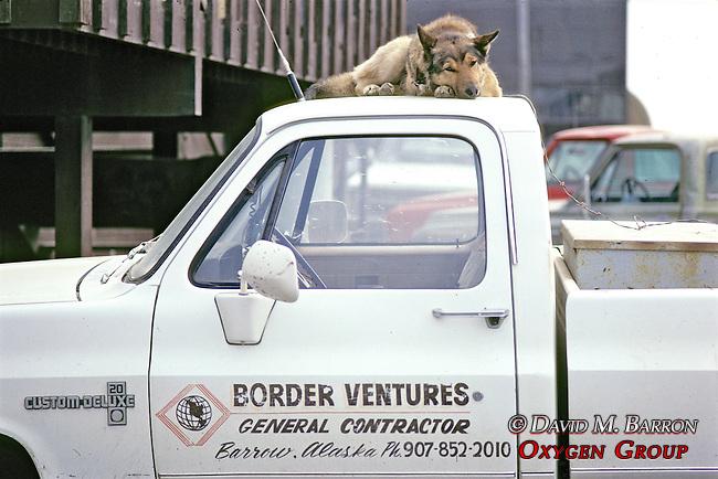 German Shepherd On Cab Of Truck