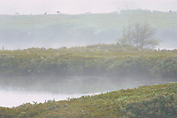 Sunrise and fog on wetland<br />