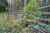 Fence in the Polish National Forest.  Zawady  Central Poland