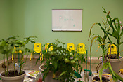 The plant education room inside the MapleViewAgricultureCenter, July 2, 2010.