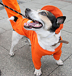 21 June 2006: A dog is dressed in Orange in support of Holland. The Netherlands played Argentina at Commerzbank Arena in Frankfurt, Germany in match 37, a Group C first round game, of the 2006 FIFA World Cup.