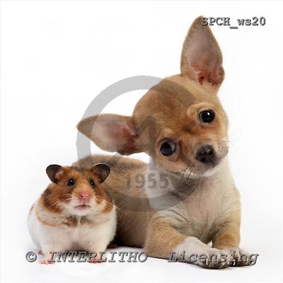 Xavier, ANIMALS, fondless, photos, SPCHWS20,#A#