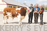 SUPREME: Jeffrey Keane and Thomas Keane (Knocknagoshel), owners, being presented with the Supreme Champion Plaque by John Brosnan (Currow), on right, after their Simmental Bull was chosen Supreme Champion at the 83rd Annual Kerry Shorthorn Breeders Show and Sale at Castleisland Mart. .