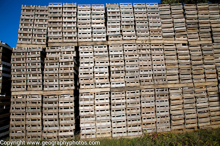 Piles of wooden crates on farm, Shottisham, Suffolk, England