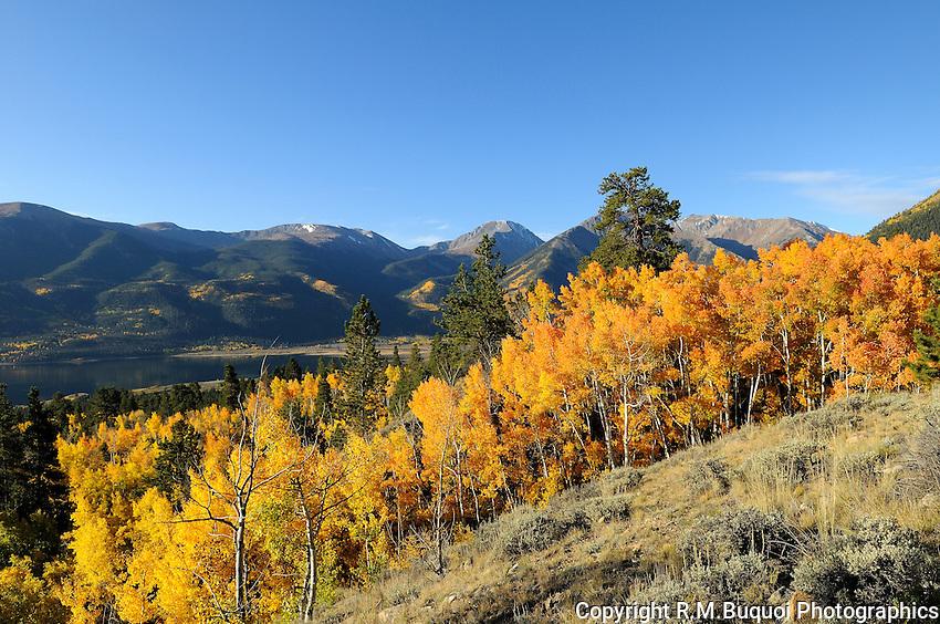 Fall Aspens above Twin Lakes, CO.