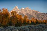 Wyoming, Teton National Park. The Teton Mountain Range with autumn trees in morning.