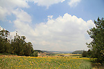 Israel, Shephelah, Masua forest overlooking Haela Valley