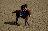 ELMONT, NY - JUNE 08: Justify gallops around the track in preparation on Friday for the 150th running of the Belmont Stakes at Belmont Park on June 8, 2018 in Elmont, New York. (Photo by Scott Serio/Eclipse Sportswire/Getty Images)
