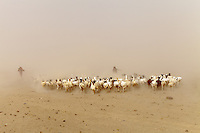 sand and salt storm in Danakil depression Ethiopia