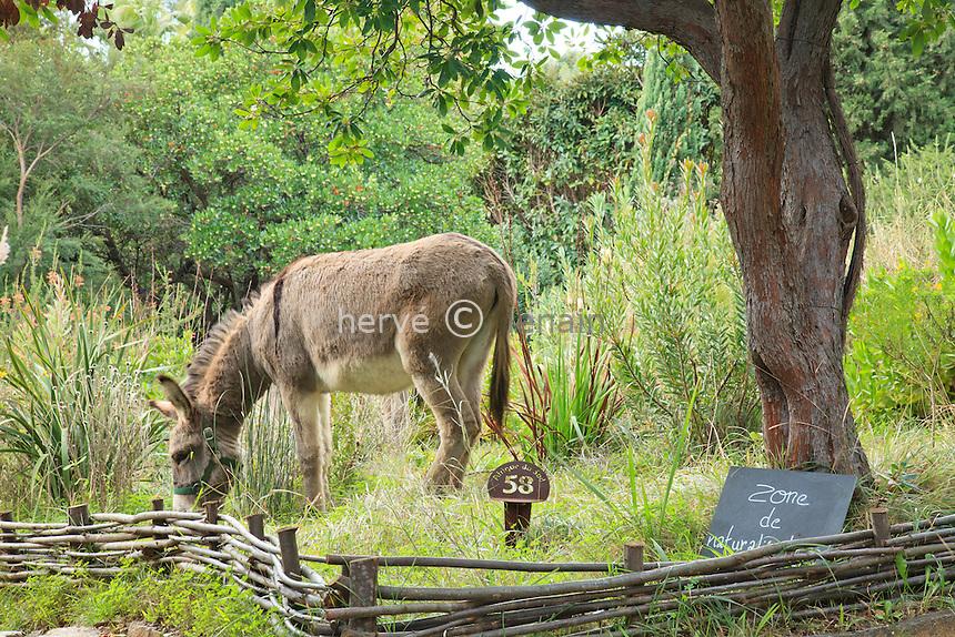 Domaine du Rayol en novembre : ânes de provence en liberté dans le jardin utilisés pour le travail.