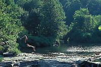 diving rocks, Shepaug River, Roxbury, CT
