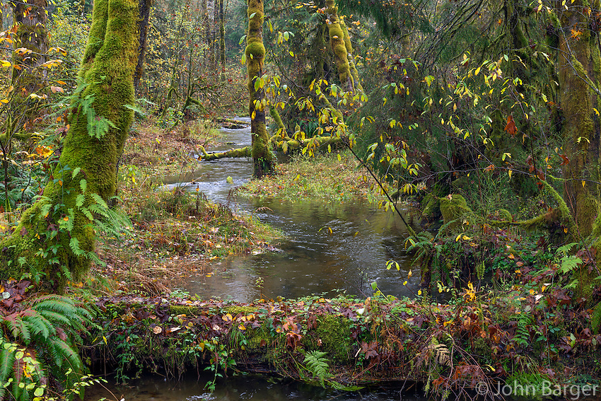 ORCAN_D234 - USA, Oregon, Cascade Range, Wildwood Recreation Site, Stream flows through autumn forest after heavy rainfall.