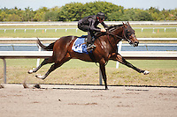 #104Fasig-Tipton Florida Sale,Under Tack Show. Palm Meadows Florida 03-23-2012 Arron Haggart/Eclipse Sportswire.