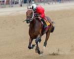 Chris and Dave (no. 14), ridden by David Cohen and trained by Robertino Diodoro, wins Race 6 July 28 at Saratoga Racecource, Saratoga Springs, NY.  (Bruce Dudek/Eclipse Sportswire)
