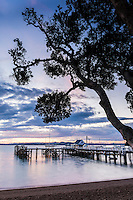 Russell Pier and Pohutukawa Tree at sunset, Bay of Islands, Northland Region, North Island, New Zealand