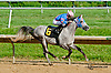 Burning Breeze winning at Delaware Park on 8/24/2013