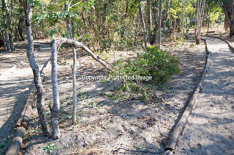 Broken Trees in Safari Camp after Elephant Visit in Hwange National Park